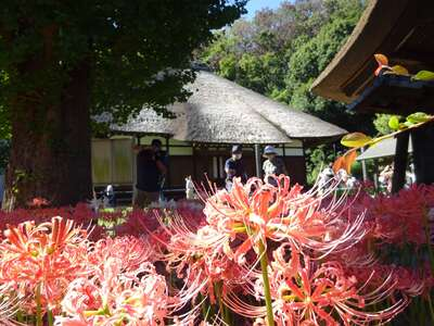 横浜 西方寺の本殿